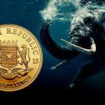 degussa-newsheader-somalia-elefant-985x385