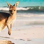 degussa newsheader kangaroo 380x125