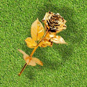 produkte degussa golf premium goldrose news