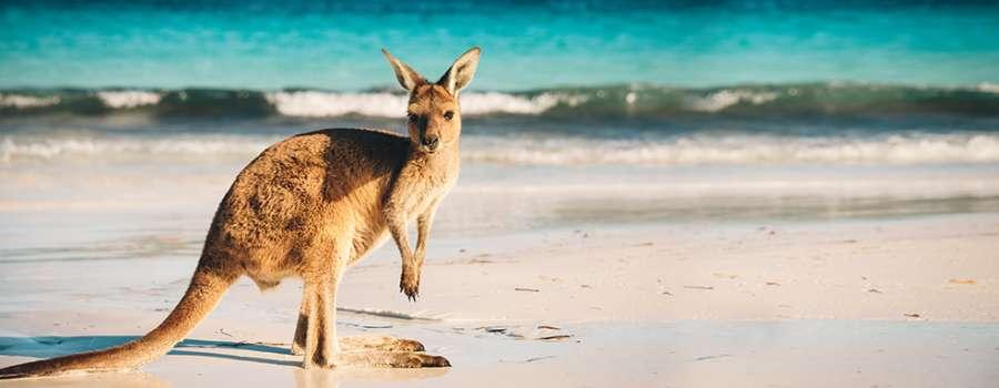 Australian Kangaroo: Preiswerter Einstieg in das Silber-Investment.