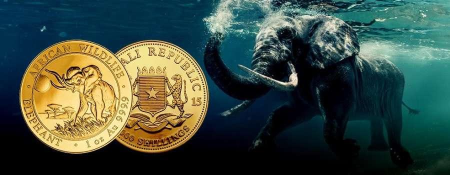 Somalia Elephant: Eine afrikanische Legende aus Hamburg.